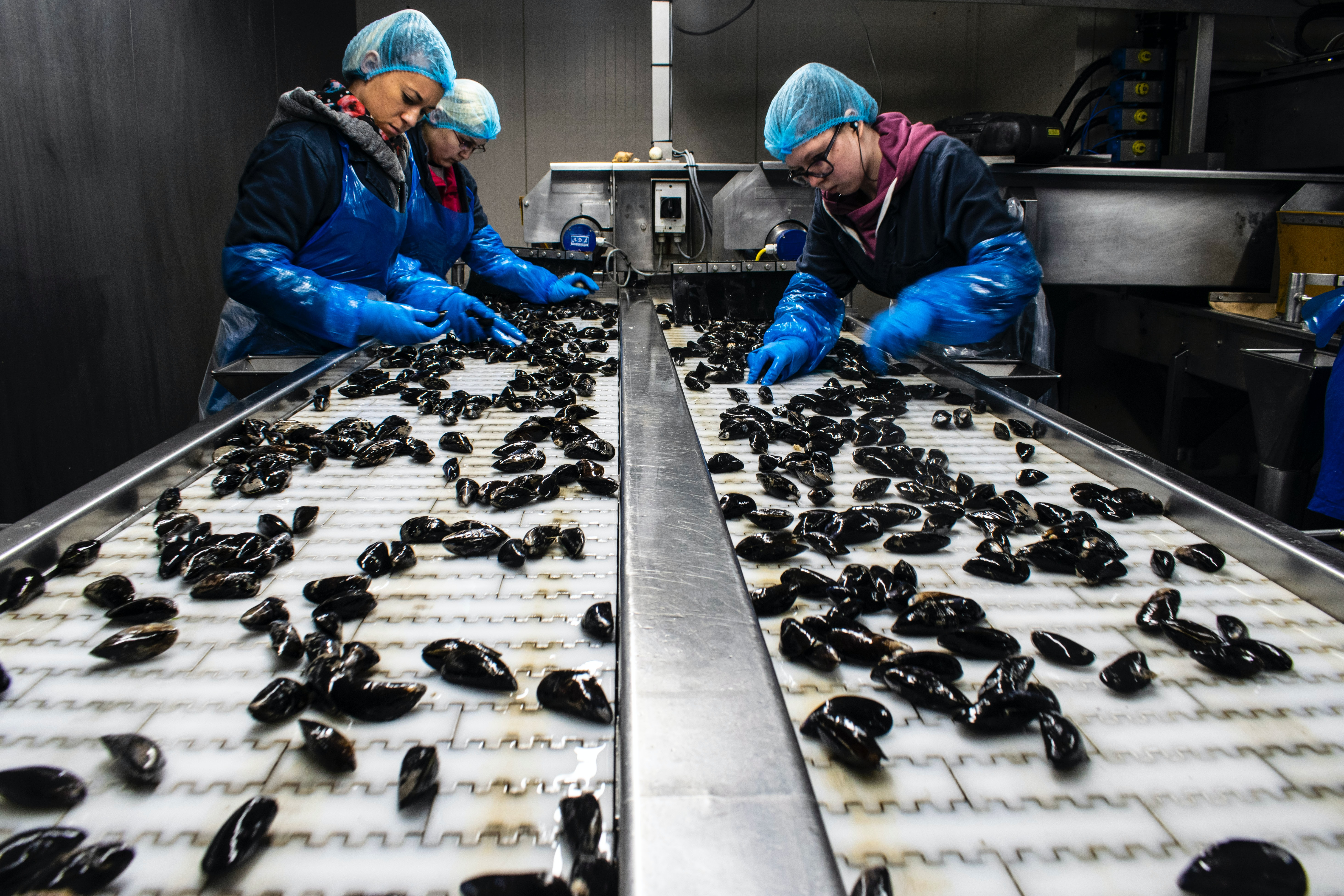 women working in seafood factory